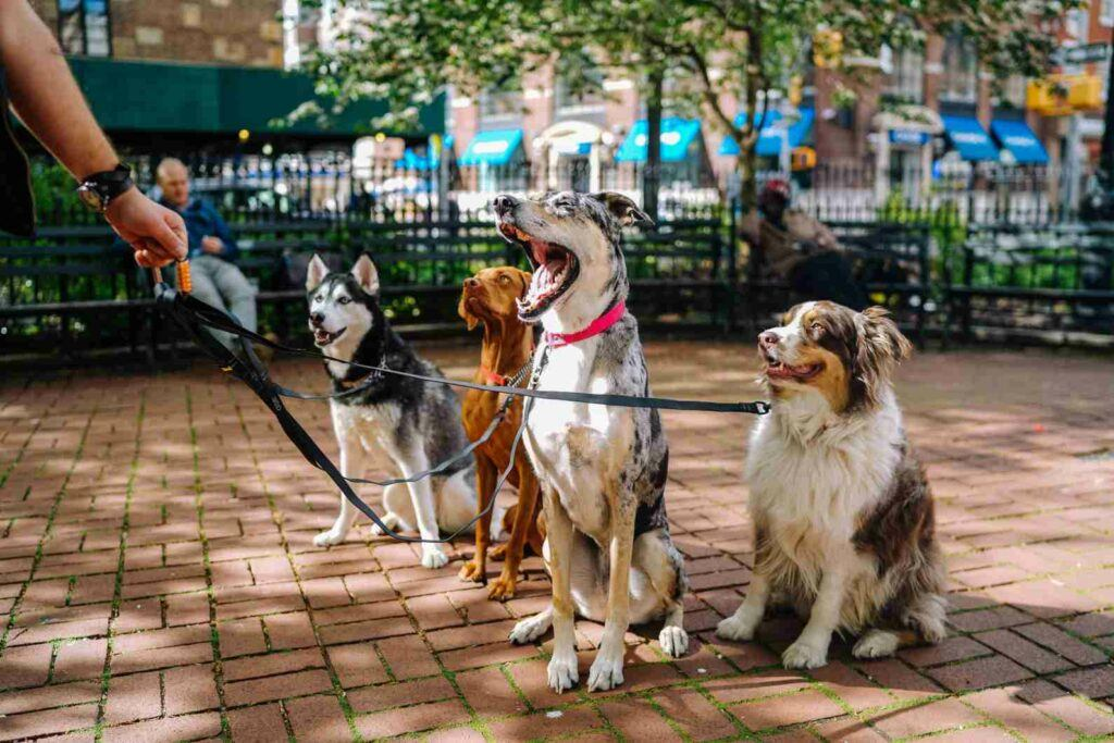 Make 2000 fast walking dogs - dogs on a leash